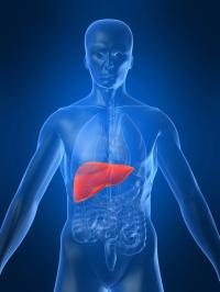 liver smaller