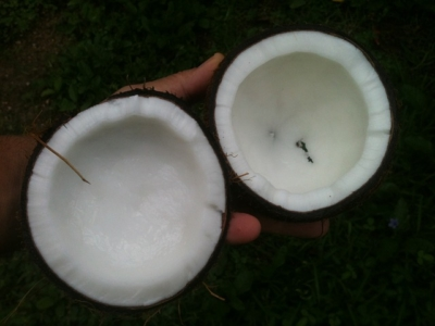 coconut 648105 640